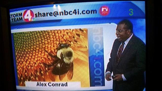 Alex Conrad sunflower TV 1