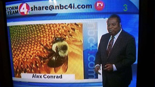 Alex Conrad sunflower TV 2