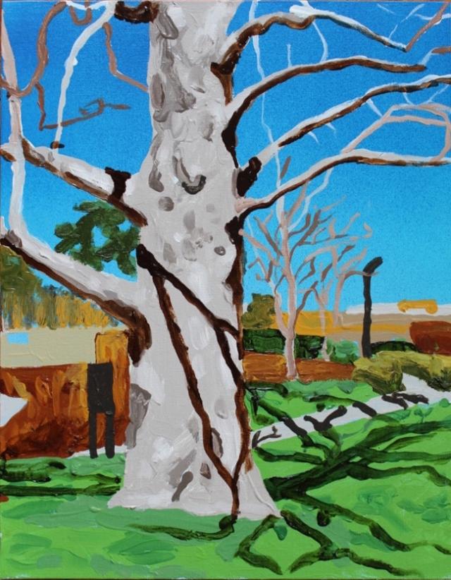 Alex Conrad sycamore tree
